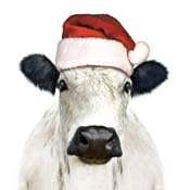 AMX5 - Christmas Cow
